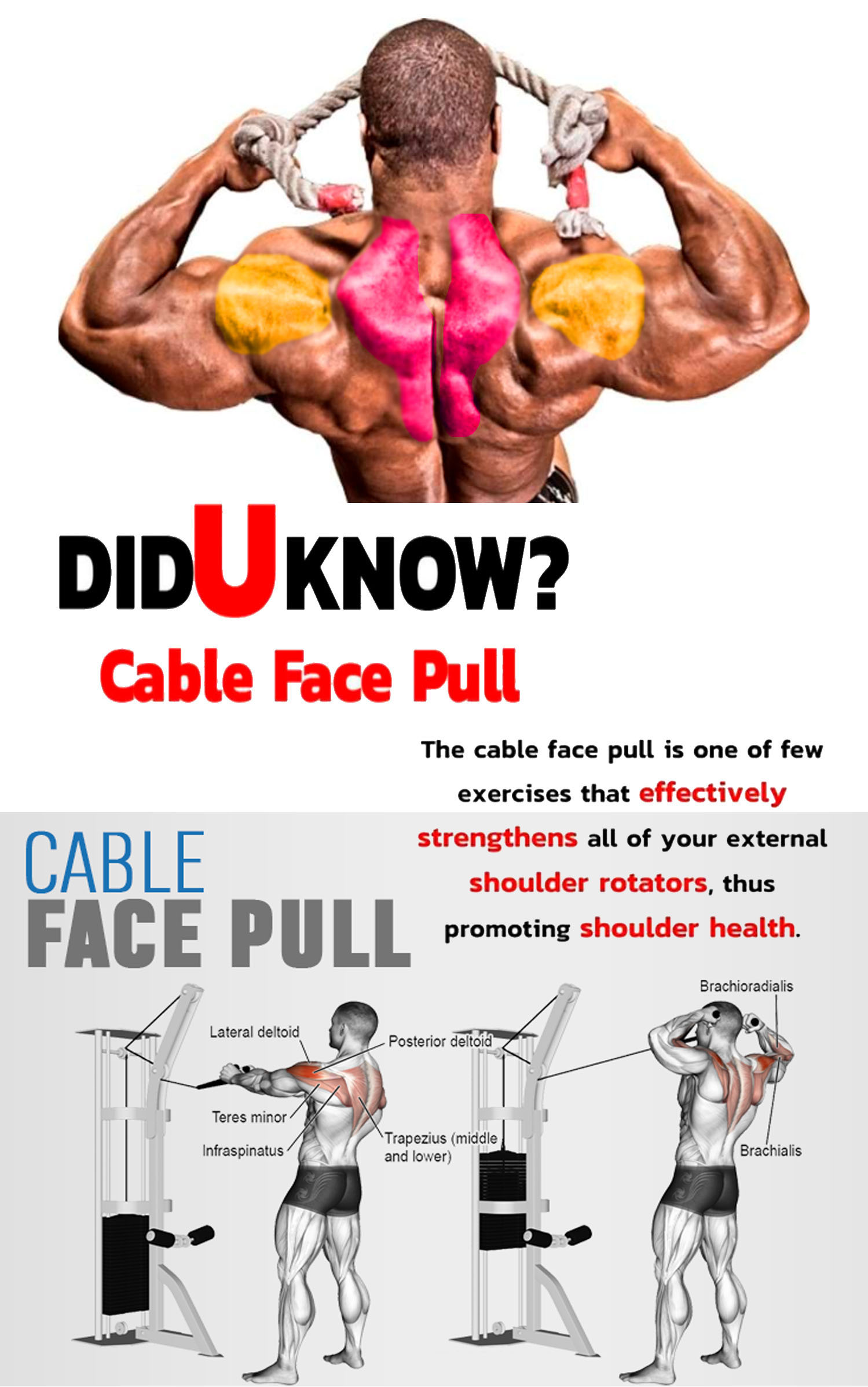 CABLE FACE-PULL