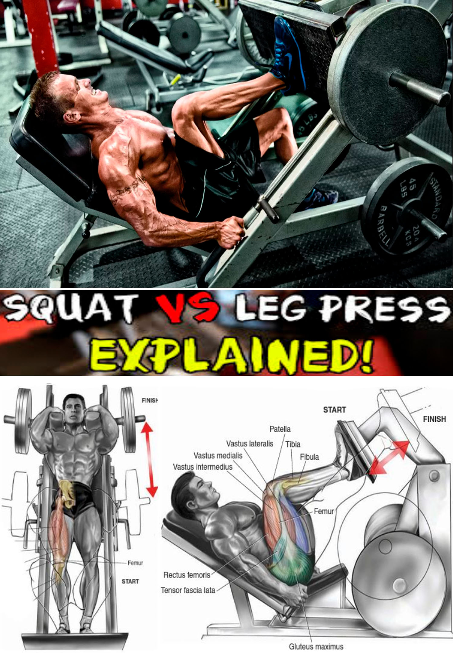 SQUAT MASHINE & LEG PRESS
