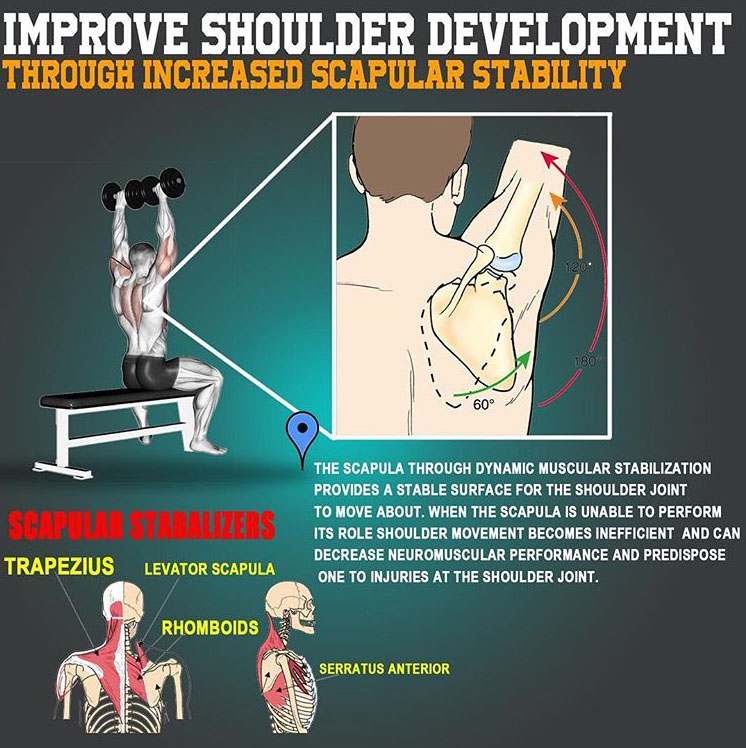Increase scapular stability for better shoulder development