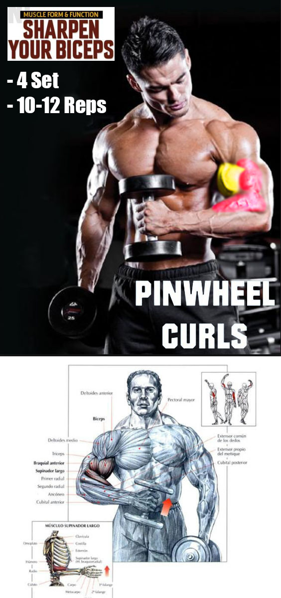 DB CROSS BODY HAMMER CURLS
