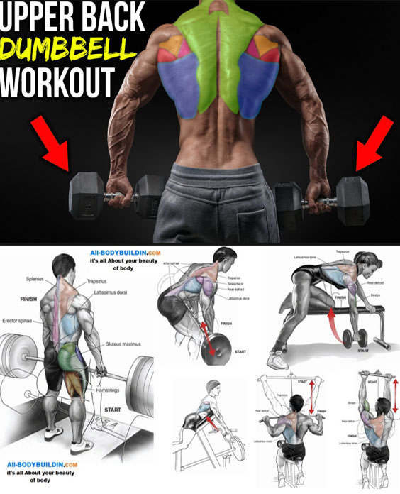 Upper back Dubbell Workout