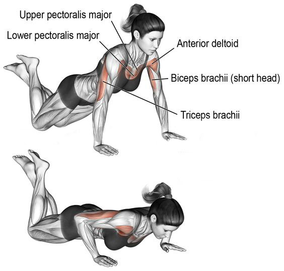 Push ups with knees