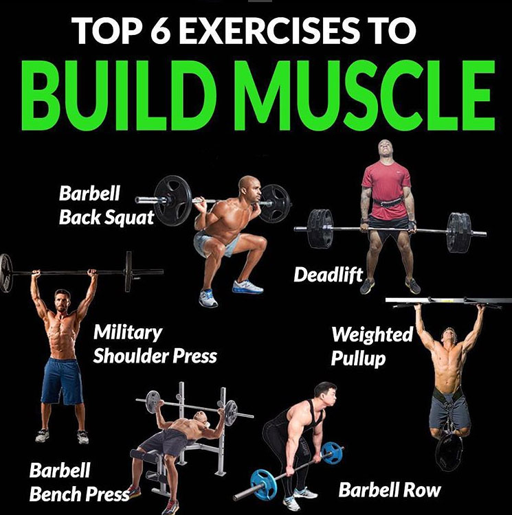 TOP 6 EXERCISES TO BUILD MUSCLE