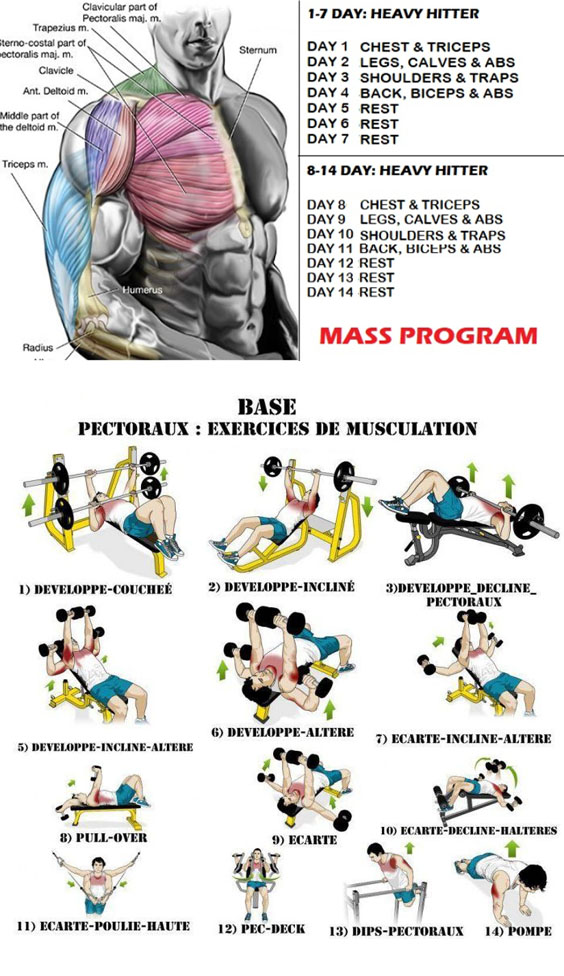 Chest WorkOut Mass Program