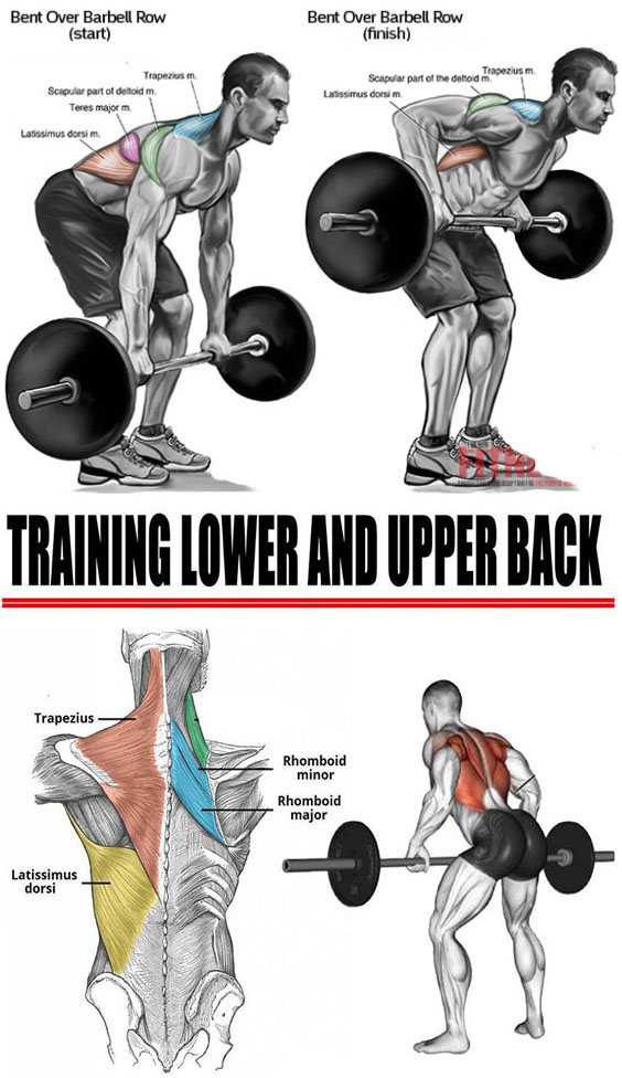 Train Upper Back