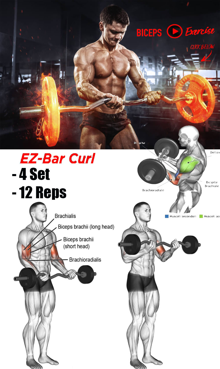 TOP WORKOUT FOR BICEPS