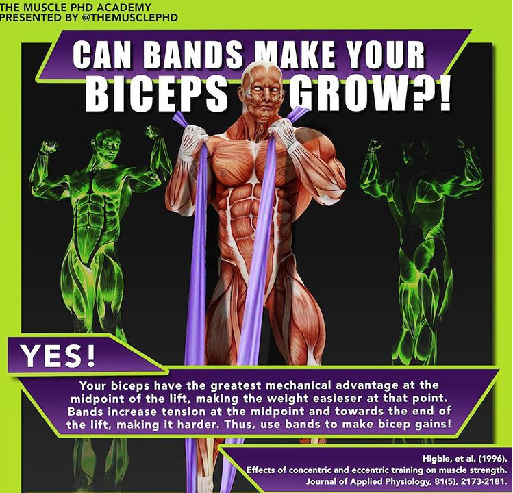 BANDS MAKE YOUR BICEPS GROW
