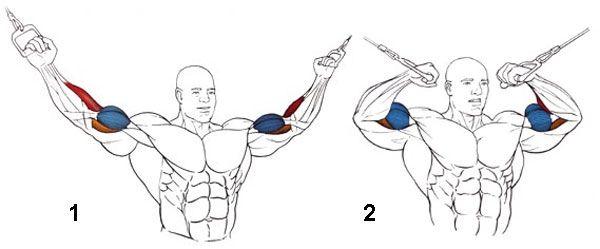 Biceps Curl