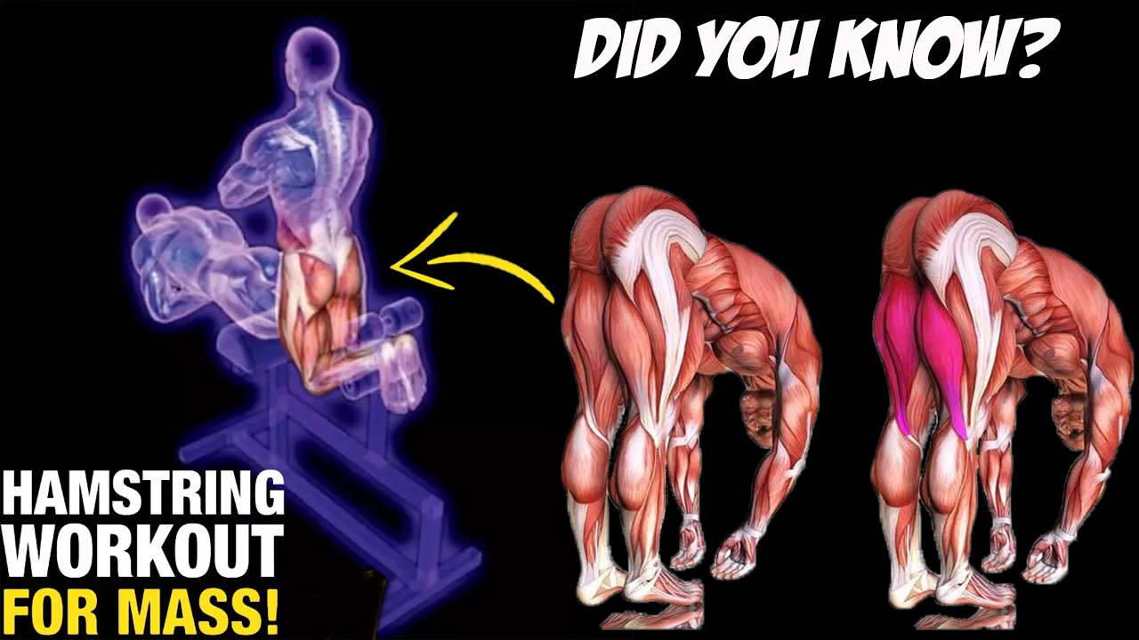 Ho to Do Hamstring Exercises for mass