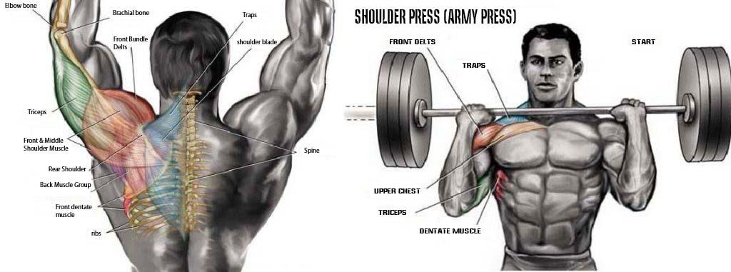 Army press workout
