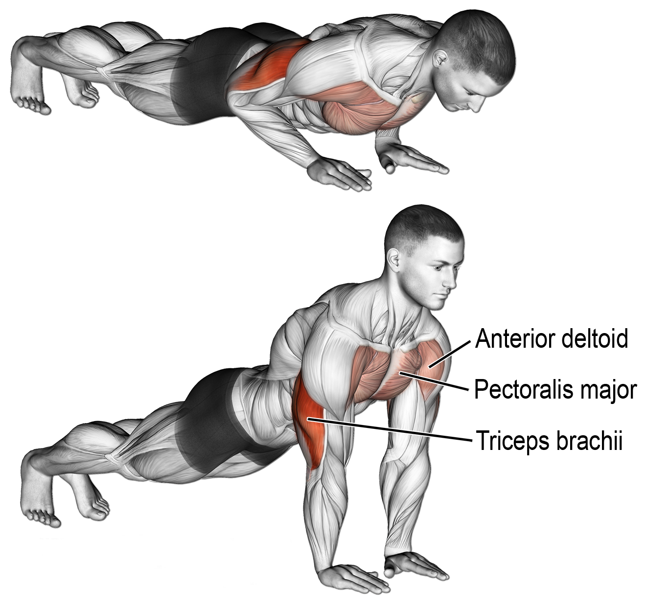 Triceps Pushups