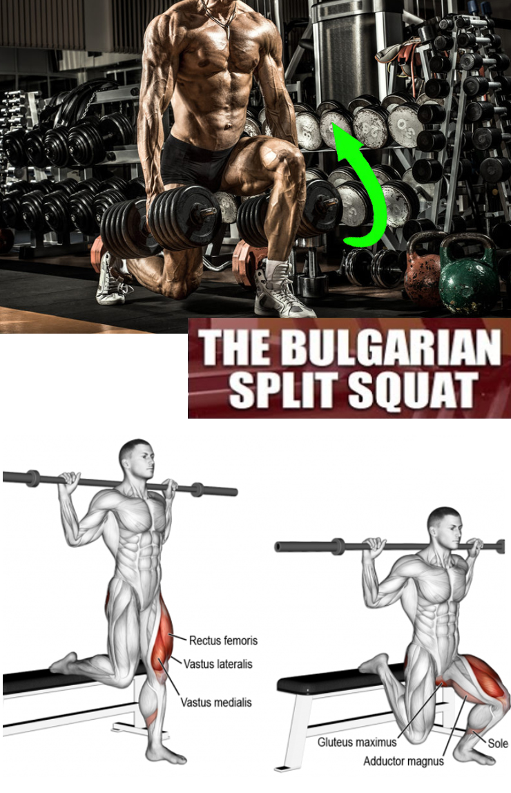 The Bulgarian Split Squat