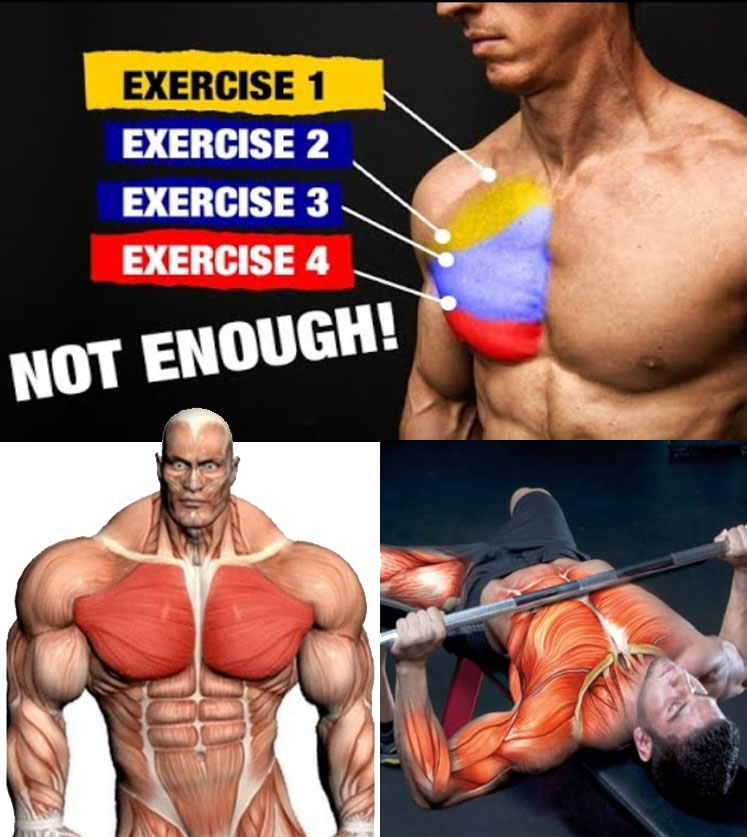 FIXING MUSCLE