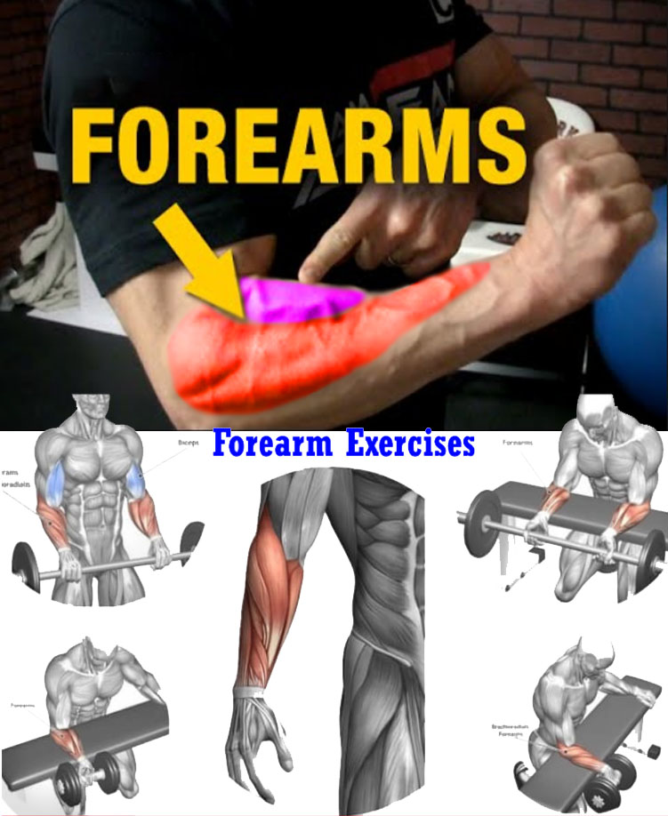 Exercises Forearms