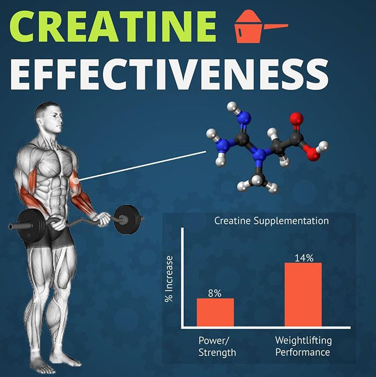 bceps curl | creatine effectiveness