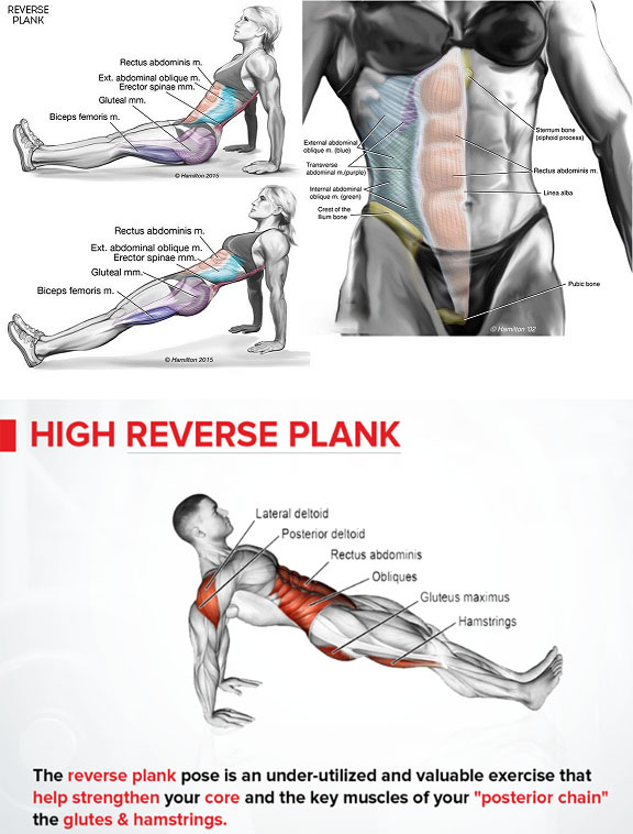 How to Reverse Plank Exercise