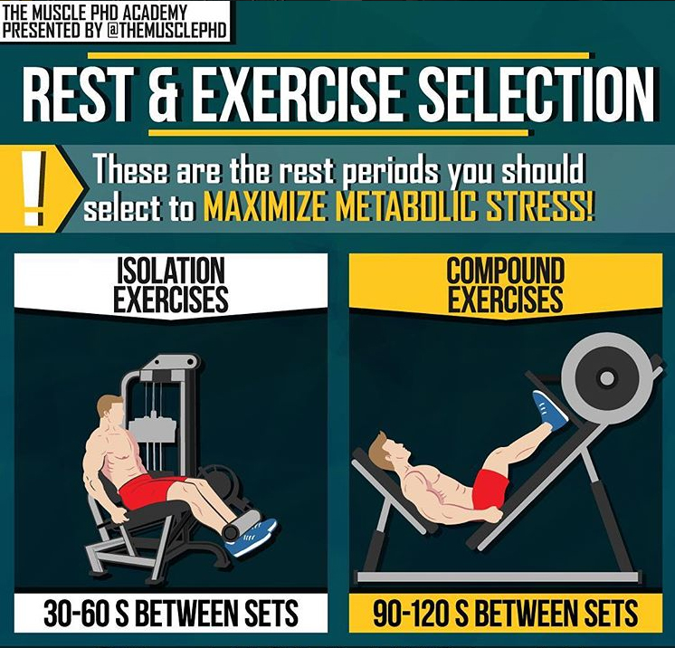 REST& EXERCISES SELECTION