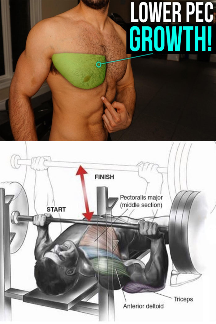 Bench Press Lower Pec