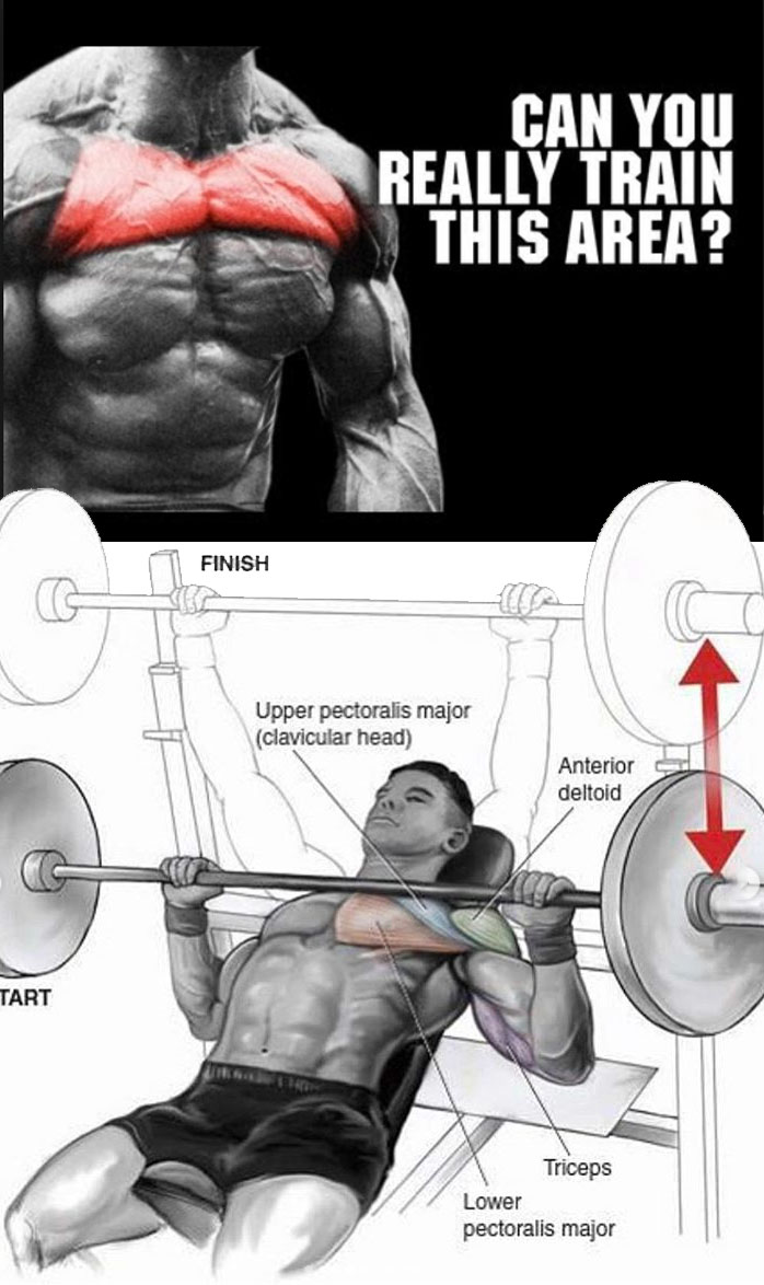 Bench Press Upper Chest