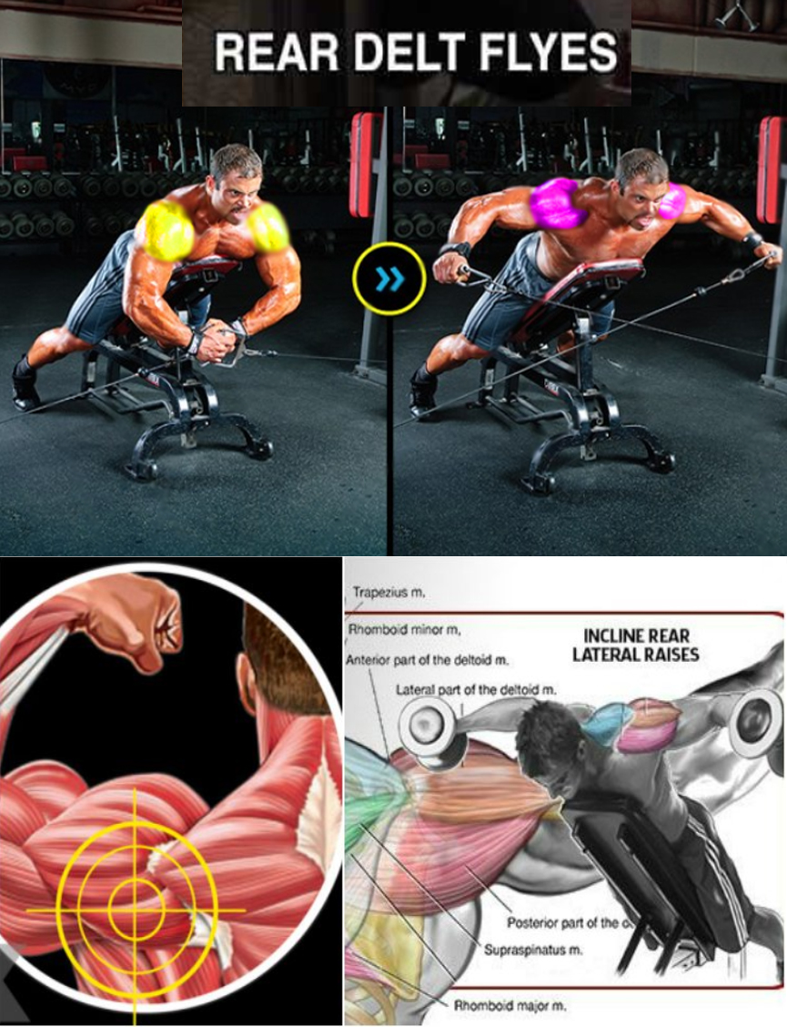 Incline Rear Delt Fly