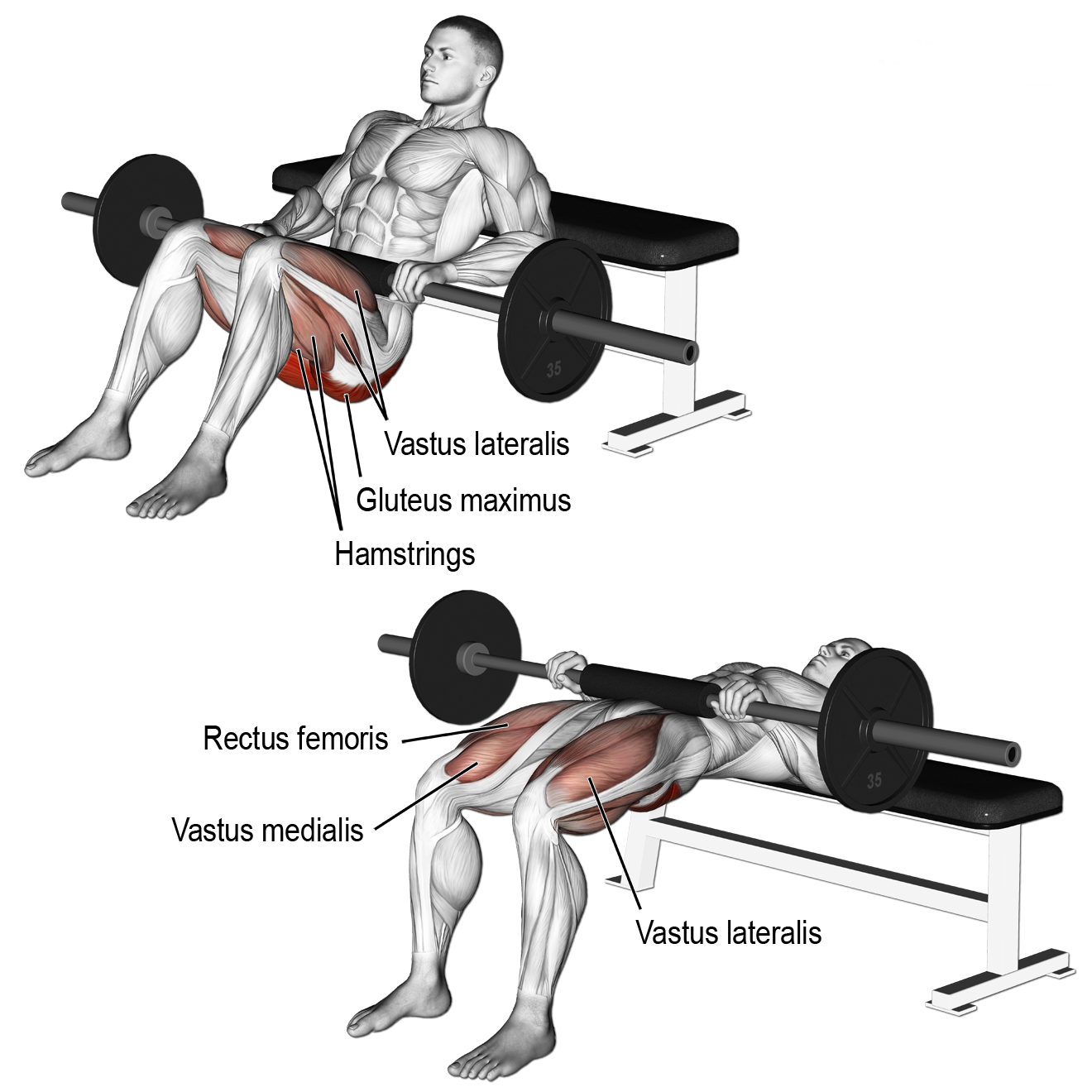 Barbell Hip Thrust: 4 x 6-8