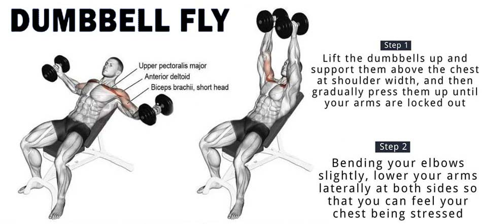 how to chest dumbbell fly