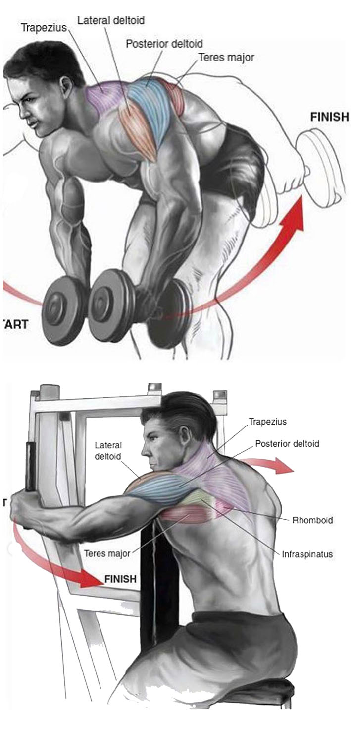 Bent-Оver Dumbbell Lateral Raise