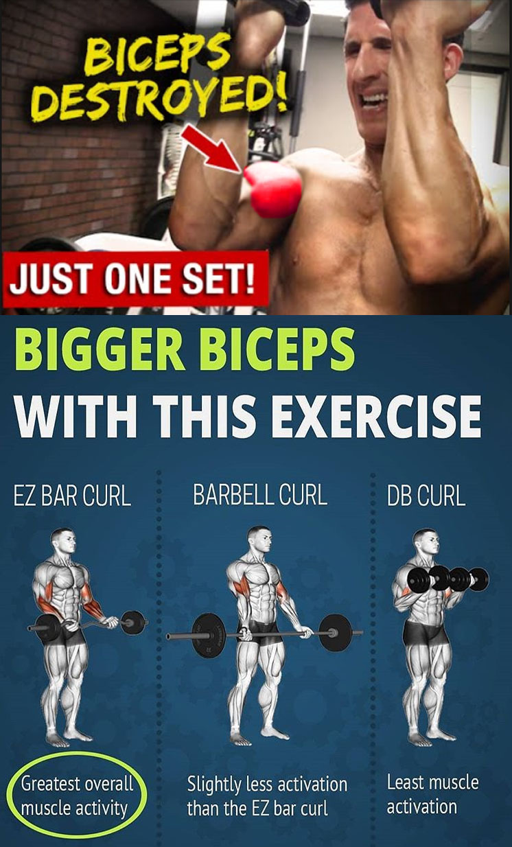 EZ BAR CURL | BARBELL CURL | DB CURL