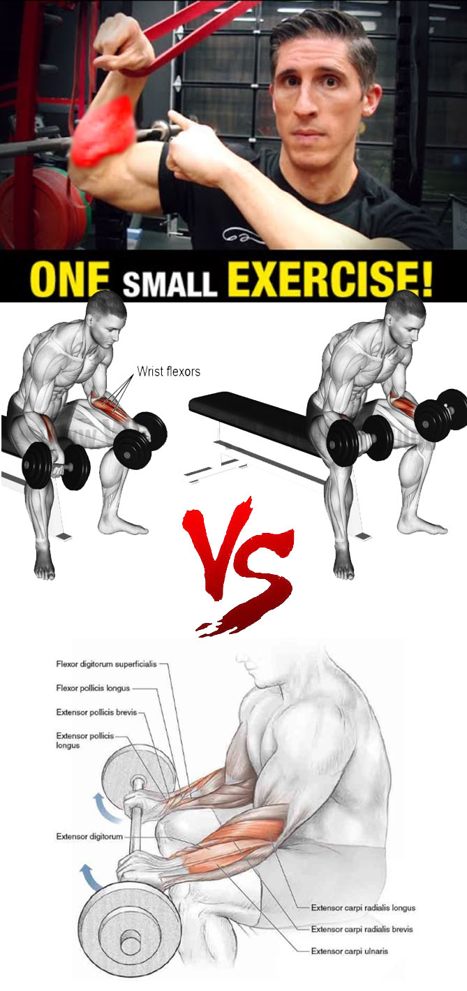 Reverse Barbell Wrist Curl Exercise