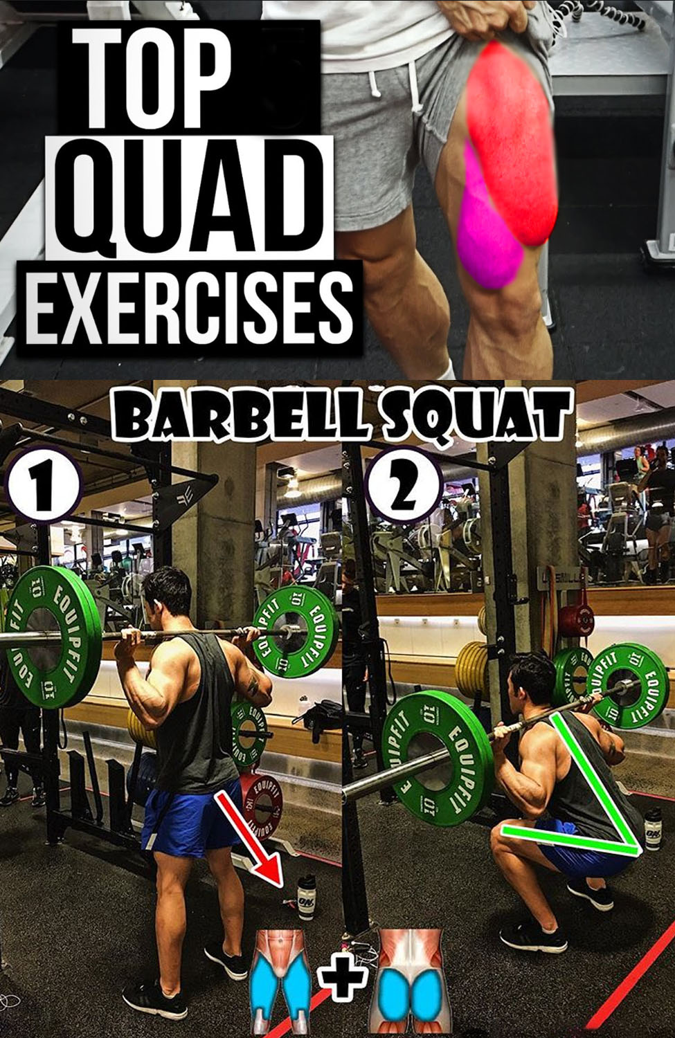 The Barbell Squat