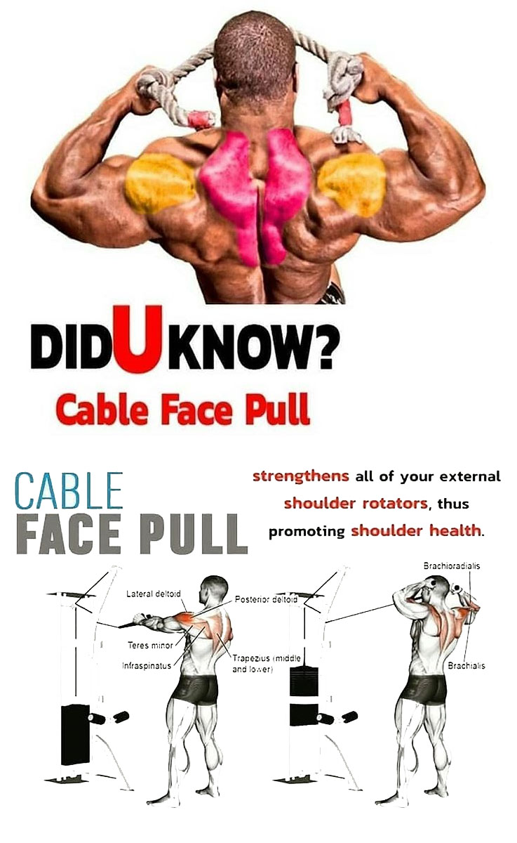Cable Face Pull