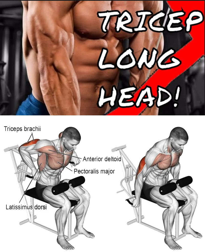 WORKOUT FOR THE TRICEPS