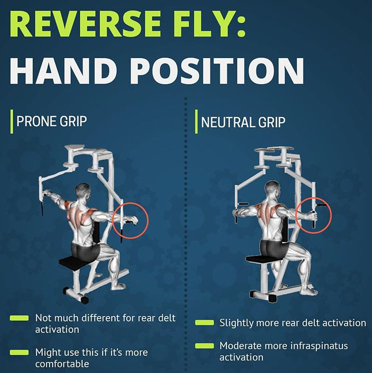 REVERSE FLYS: HAND POSITION