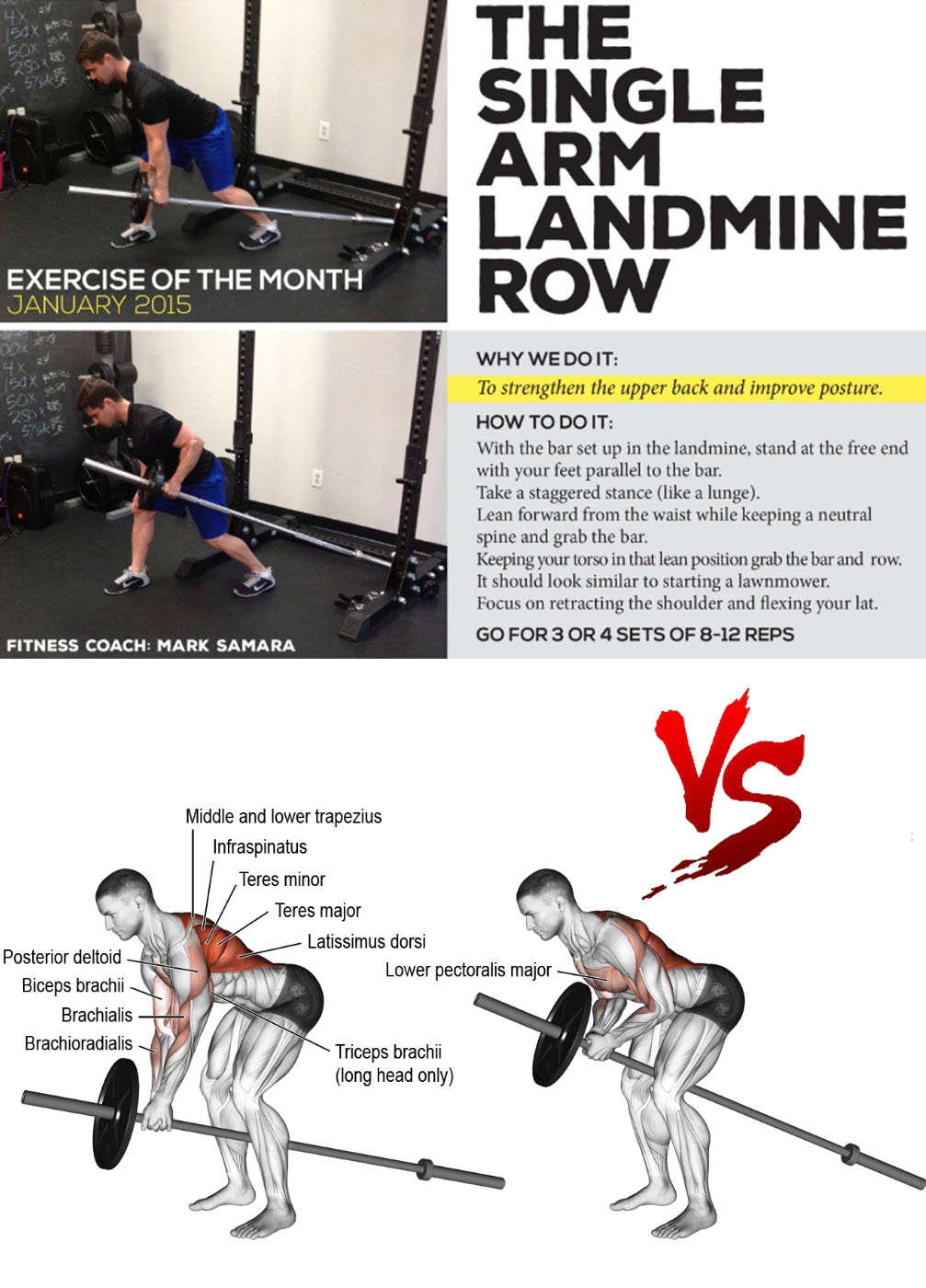 Landmine Single-Arm Barbell Row