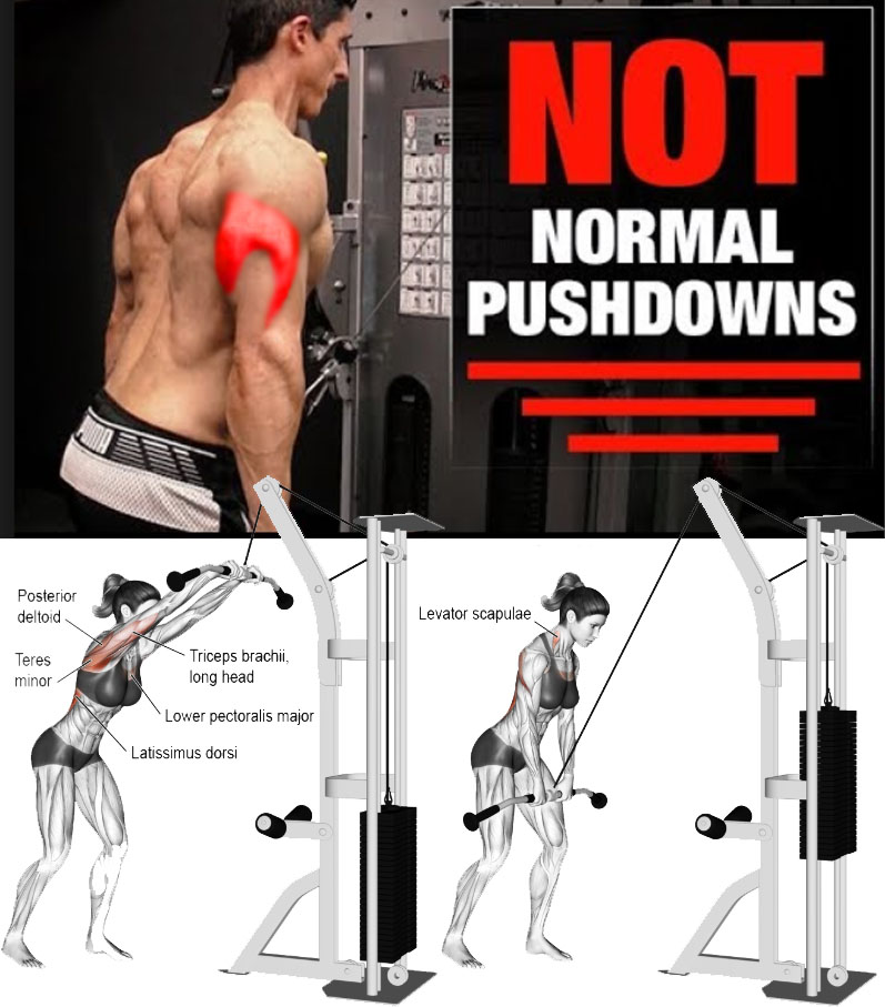 Cable Rope Triceps Pushdown