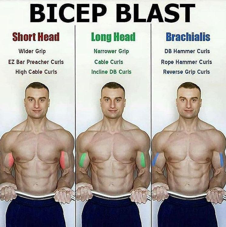 BICEPS BLAST | Short Head | Long Head | Brachialis