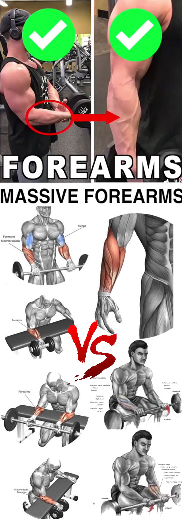 MASSIVE FOREARMS