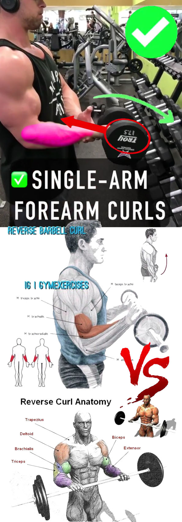 FOREARMS CURL EXERCISES