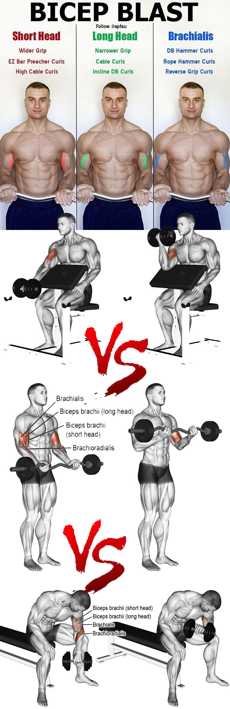 HOW TO BICEPS BLAST