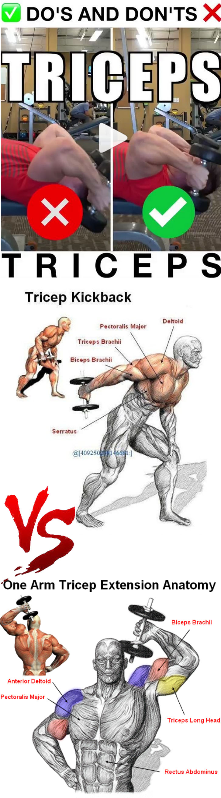 GUIDE TRICEPS EXERCISES