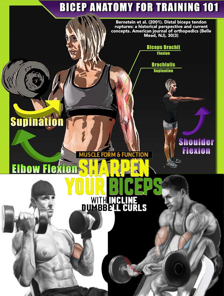 SHARPEN YOUR BICEPS