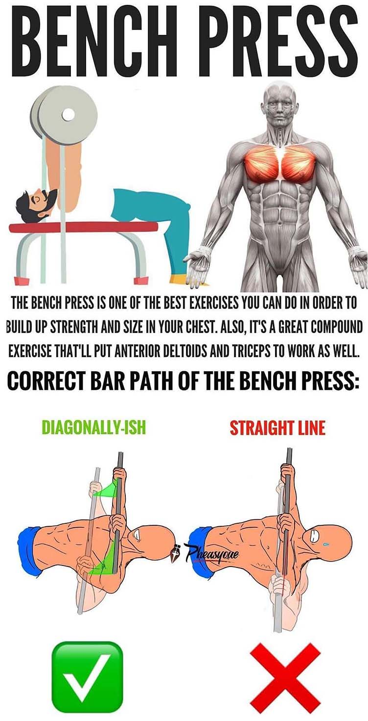 Barbell Bench Press / Chest Press