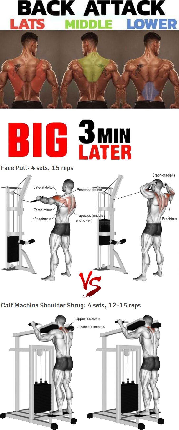 Calf Machine Shoulder Shrug VS Face Pull