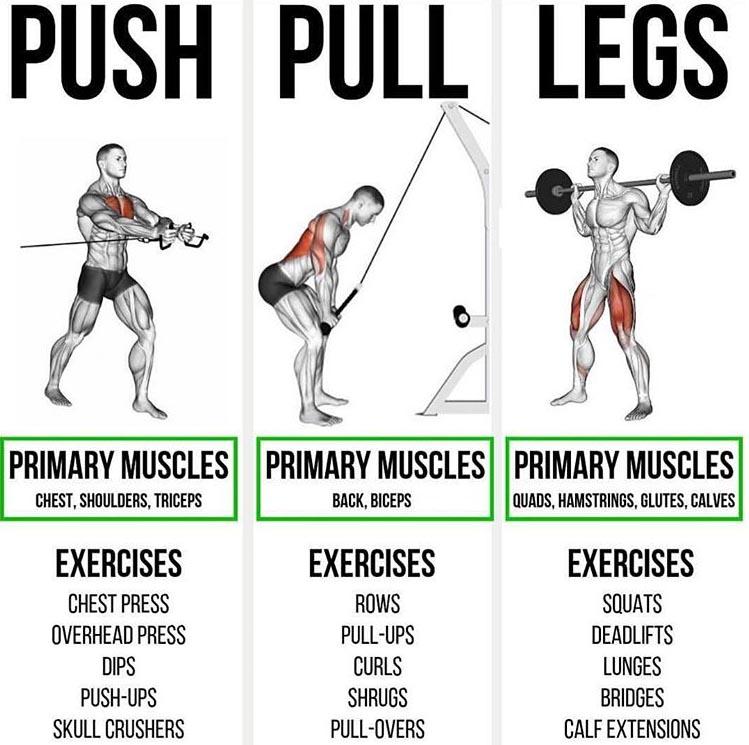 PUSH/ PULL/ LEGS EXERCISES