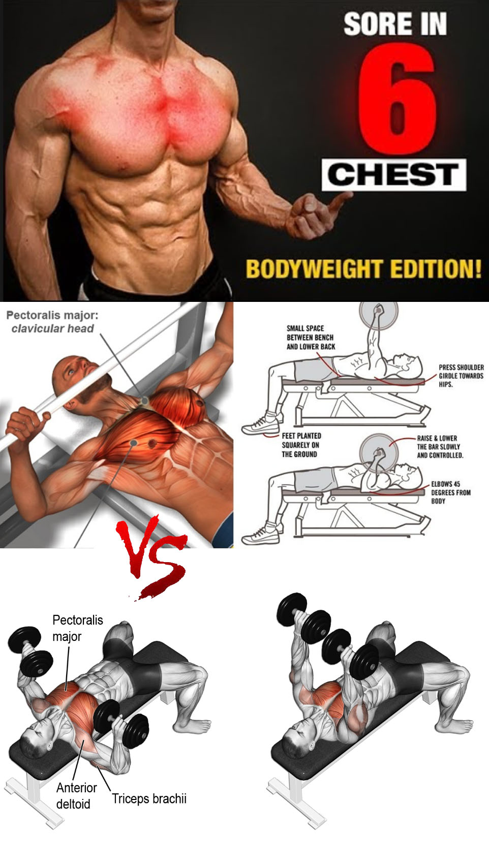 Dumbbell bench press VS Machine Chest Press