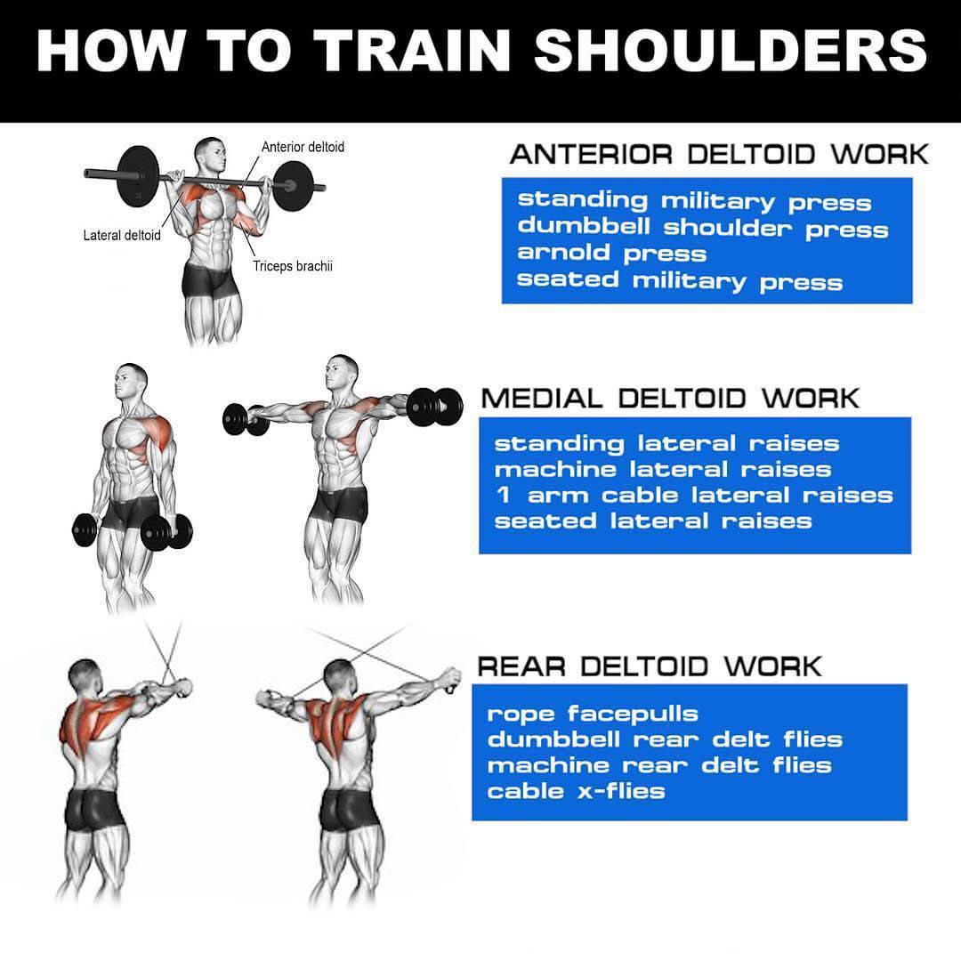How to Train Shoulders