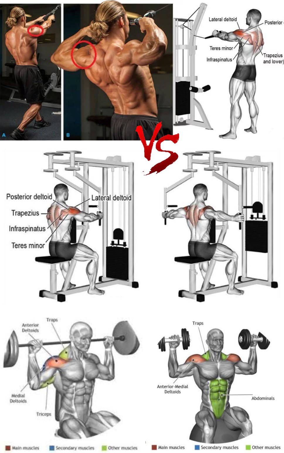 Training Your Delts