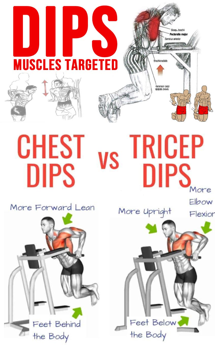Triceps Dips Muscle Targeted
