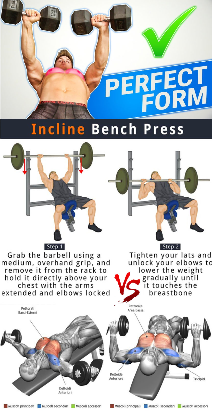 Flat Dumbbell Press VS Incline Bench Press