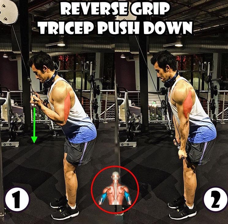Reverse Grip Tricep Push Down